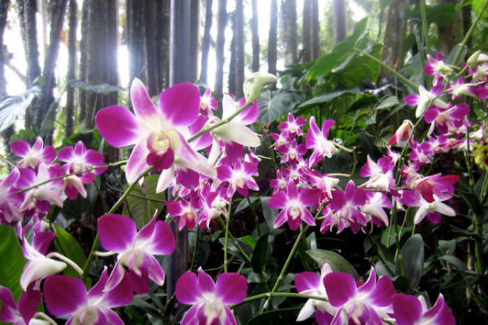 Image result for orchid garden in spring